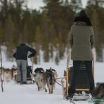 Balade chiens de traineau à Hetta, Finlande