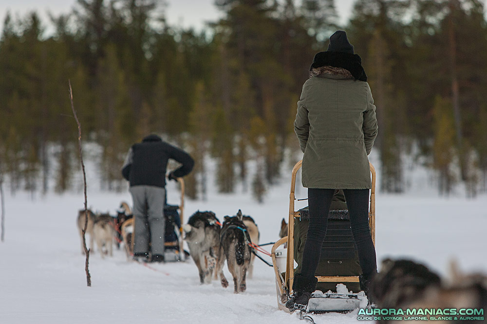 Chiens de traineau en laponie aurora maniacs for Balade chien de traineau doubs