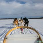 Balade traineau à chiens, Finlande - Laponie