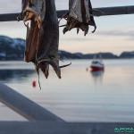 Poisson séché, côte Norvège, Tromso