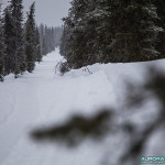 Forêt en Laponie finlandaise