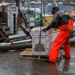 Pêcheur norvégien