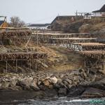 Séchage du poisson à Reine, Iles Lofoten
