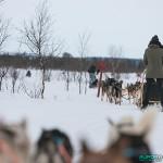 Traineau à chiens, Hetta, Enontekio (Finlande)