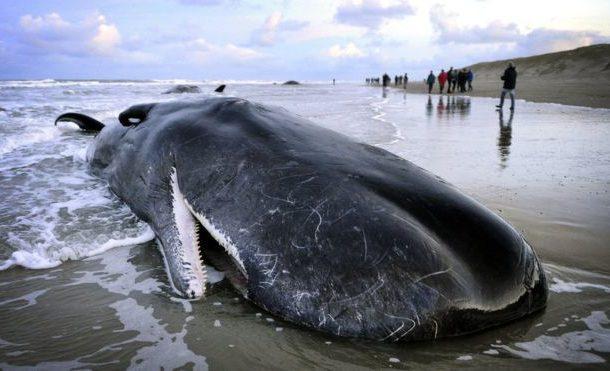 Certains échouages de baleines seraient liés aux tempêtes solaires